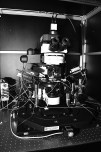 2-photon microscope 3
